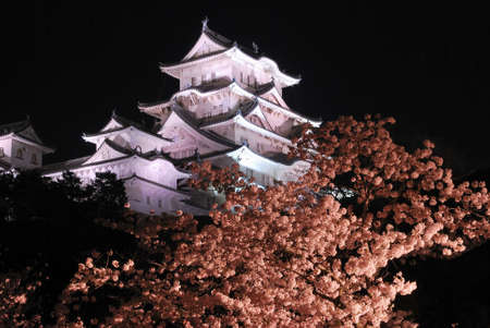 Night view of a castle with cherry blossoms