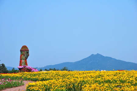 Huge field of flowers with volcano towering in the background photo