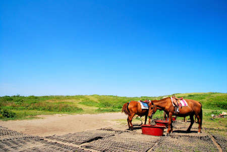 Feeding horses with clear, blue sky in the background Banque d'images