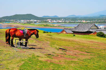 Feeding horses with clear, blue sky in the background Stock Photo