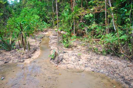 Marismas en un bosque con agua sucio y fuertemente contaminado. Adecuado para conceptos tales como el agua y la contaminación, naturaleza y medio ambiente, conservación de la tierra, el calentamiento global y la urbanización y la superpoblación. Foto de archivo - 5553825