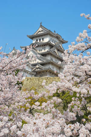 Cherry blossoms in full bloom in spring at Himeji castle, Japan. A symbol of respect, power, glory, history, and peace.