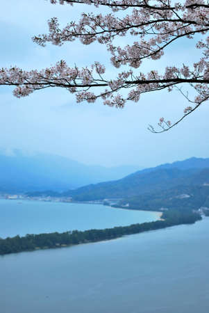 Japanese cherry blossoms during spring overlooking a land bridge, symbolizing the concept of transiency, the short-lived nature, passing of time and other abstract ideas. Taken at Amanohashidate, Kyoto, Japan. photo