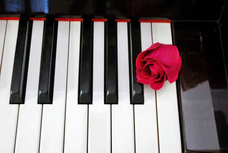 Top view of rose on piano keyboard. For love of music, creativity and love and romance concepts. photo