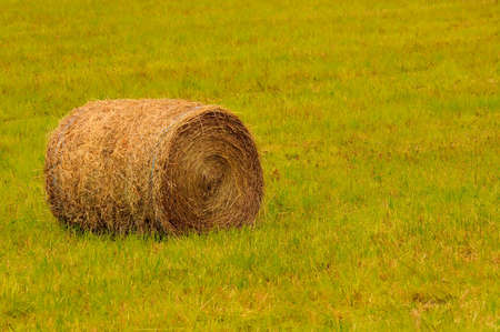 Big round bale of straw in the meadow. photo