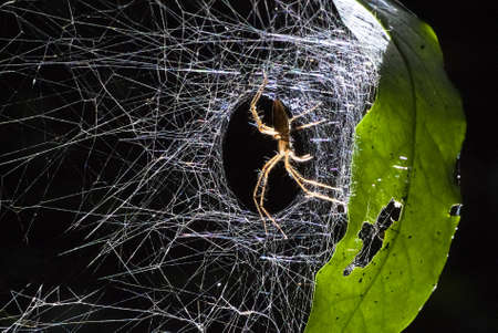 A spider lives in its nest attached to a leaf photo