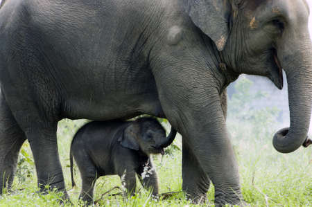 animals together: Mother elephant and her baby