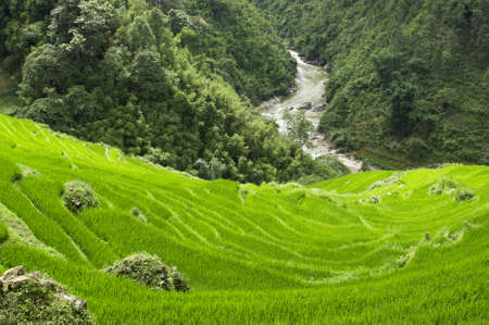 Green Terraced Rice Field in Sapa, Vietnam photo