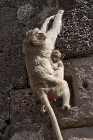 Mother monkey hangs herself on the wall with her baby photo