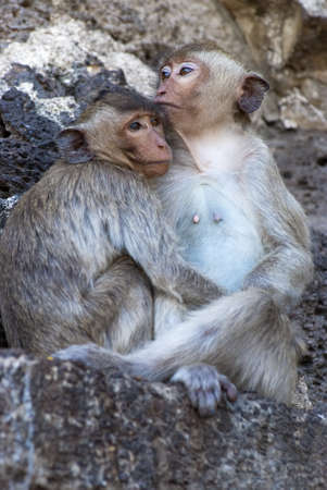 Two monkeys in each others arms photo