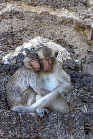 Two monkeys sleep together photo