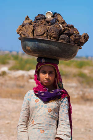 india cow: RAJASTHAN, INDIA – FEB 27 : a woman carries a basin full of cow dung on her head on February 27, 2013 in Rajasthan, India. Cow dung will be caked, dried and used as cooking fuel for villagers in India. Editorial