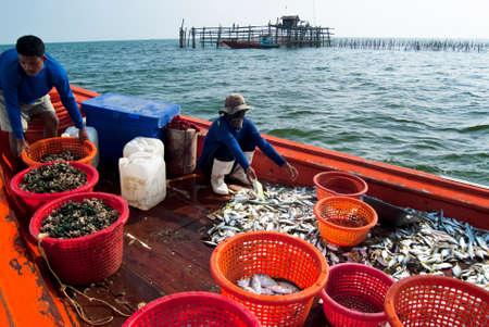 fischerei: Samutsongkram, THAILAND - 10. Dezember Fischer zu inspizieren und Grad der Fisch zum Verkauf bereit am Dez 10, 2010 in Samutsongkram ist Thailand Samutsongkram eine K�sten Provinz, in der kommerziellen Fischerei durchsetzen