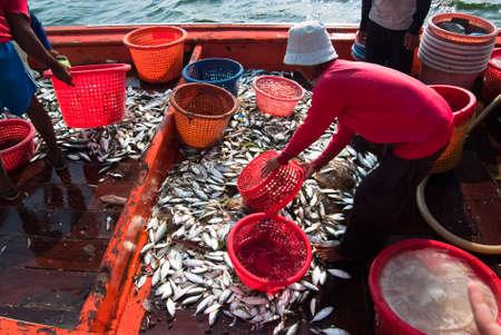 fischerei: Samutsongkram, THAILAND - 10. Dezember Fischer zu �berpr�fen und Grade der Fisch zum Verkauf bereit am Dez 10, 2010 in Samutsongkram ist Thailand Samutsongkram eine K�stenprovinz, wo kommerziellen Fischerei durchsetzen