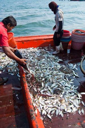 pesquero: Samutsongkram, Tailandia - 10 de diciembre: Los pescadores inspeccionar y clasificar el pescado listo para la venta el 10 de Dic de 2010 en Samutsongkram, Tailandia. Samutsongkram es una provincia costera donde predominan las pesquer�as comerciales.