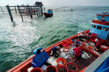 commercial fisheries: SAMUTSONGKRAM, THAILAND – DEC 10: Fishermen inspect and grade the fish ready for sale on Dec 10, 2010 in Samutsongkram, Thailand.  Samutsongkram is a coastal province where commercial fisheries prevail.