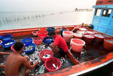 pesquero: Samutsongkram, Tailandia - 03 de diciembre: Los pescadores inspeccionar y clasificar el pescado listo para la venta el 3 dic, 2011 en Samutsongkram, Tailandia. Samutsongkram es una provincia costera donde predominan las pesquer�as comerciales.