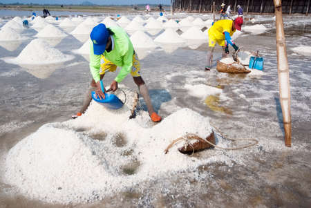 SAMUTSONGKRAM, THAILAND - MARCH 8: Farmers collect the ready-to-harvest salts on March 8, 2014 in Samutsongkram, Thailand. Samutsongkram is a big salt production area of Thailand.