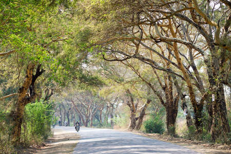 tree canopy: Tree canopy in Mandalay, Myanmar. The barks of these trees are sources of brown dye. Stock Photo