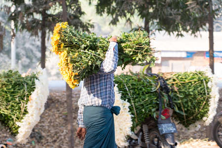principally: MANDALAY, MYANMAR - FEB 2, 2016: morning flower market on the roadside to Mandalay on Feb 2, 2016.  Flowers are principally used in Myanmar as offerings to Buddha, both in homes and temples.