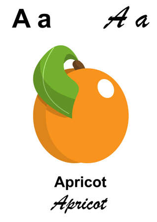 alphabet letter A as apricot Stock Photo - 13423247