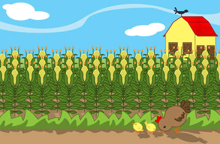 outside the house: farm with corn field and hen with chicks Stock Photo