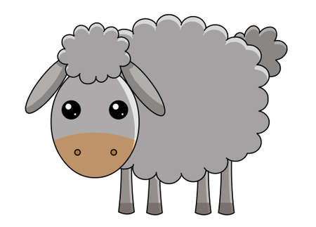 sheep wool: sheep