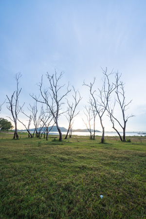 Forma di albero morto con il cielo del tramonto Archivio Fotografico - 35079623