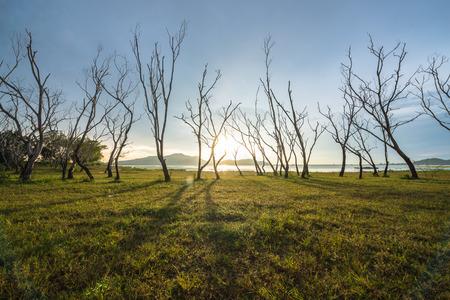Forma di albero morto con il cielo al tramonto Archivio Fotografico - 35079627