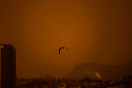 rare animals: Egret Flying in the sky Stock Photo