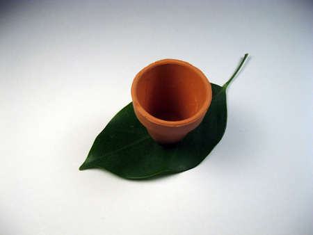 seeding: leaf and very small plant pot