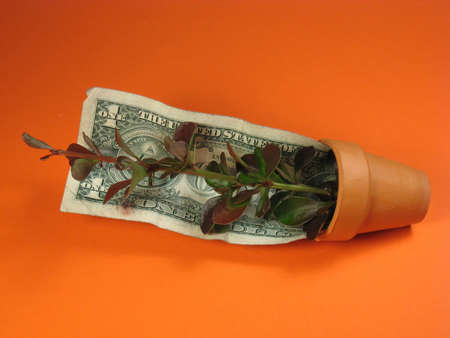 seeding: dollar bill and plant and pot Stock Photo