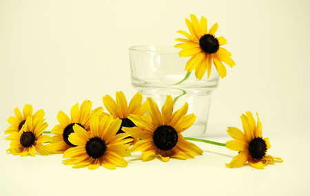 ブラックアイド susans 花とグラス静物します。 写真素材