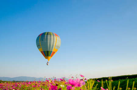 hotair: Colorful hot-air balloons flying over the flower
