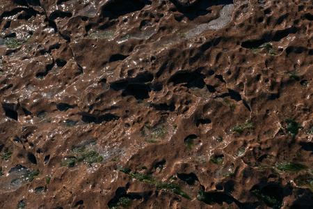 brown textured sea rock material