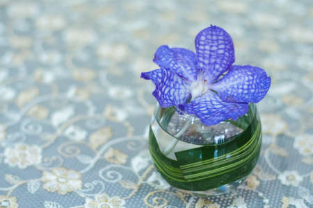 purple orchid in glass on table Stock Photo