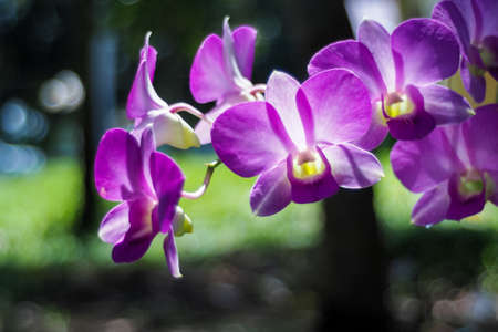 olant: purple orchid in garden