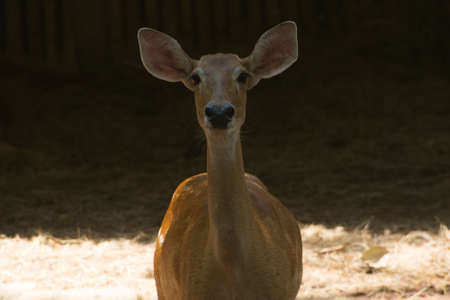 Deer close up in zoo photo