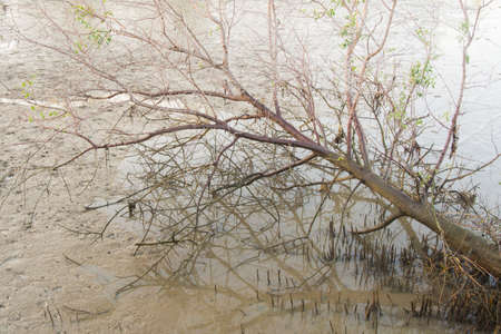 absract: The tree in  mangrove forest Stock Photo