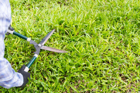 Gardener cut a grass with hedge trimmers