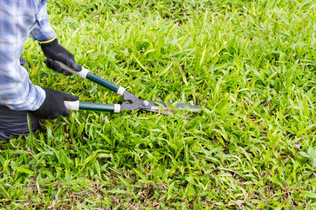 Gardener cut a grass with hedge trimmers Stock Photo - 82173178