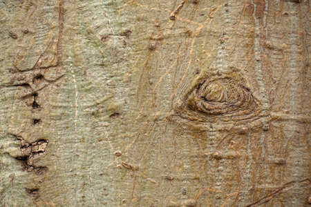 Background of bark texture detial
