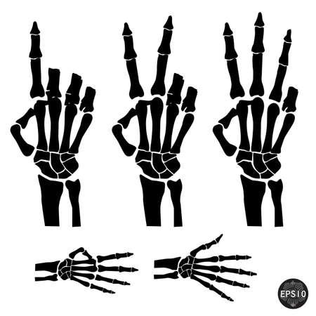 squelette: Squelette de la main indique le nombre de doigts, Halloween, vecteur