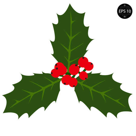 ilex aquifolium holly: Holly berry - Christmas vector symbol