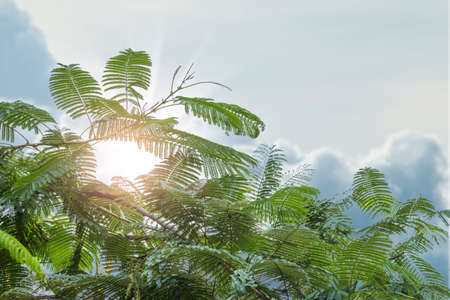 Green leaves with cloud sky and sun beams