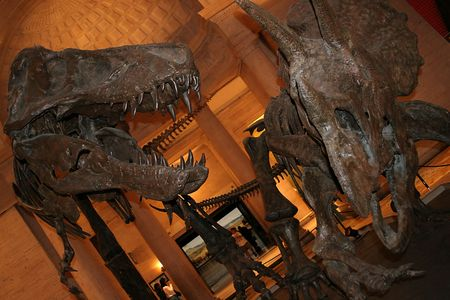 dueling: Dinosaur exhibit at Nature History Museum of Los Angeles