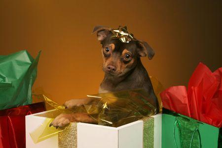 holiday puppy present