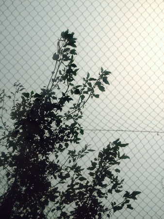 grid: Fenced leaves silhouett