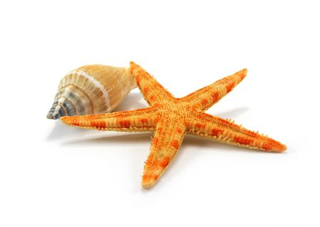 seastar: Seastar and sea shell