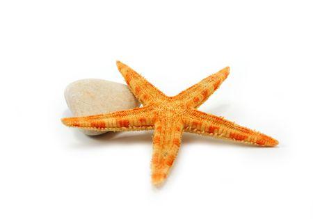 seastar: Seastar on a stone